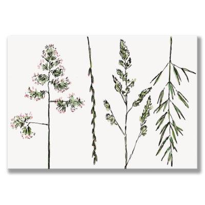 Kunstdruck Gras I