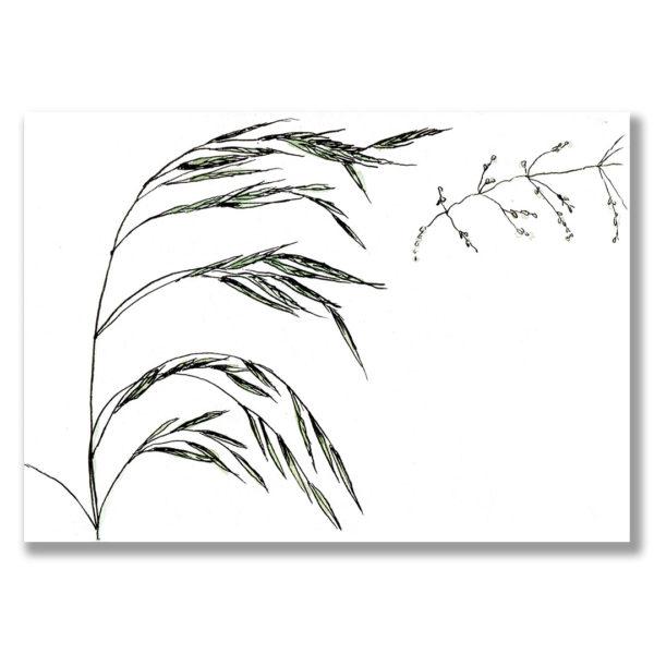 Kunstdruck Gras III