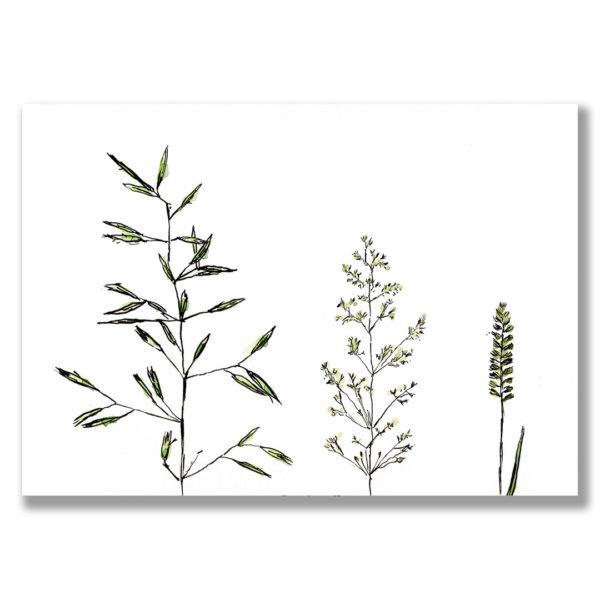 Kunstdruck Gras IV